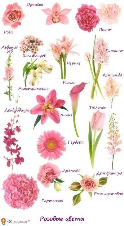 Каталог название цветов для букетов